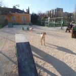 Dog Park Telheiras